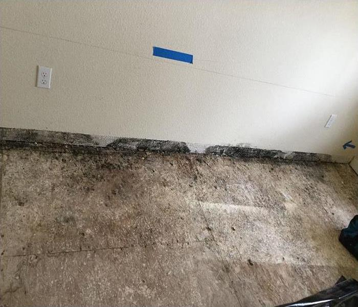 Mold Damage In Sacramento Before