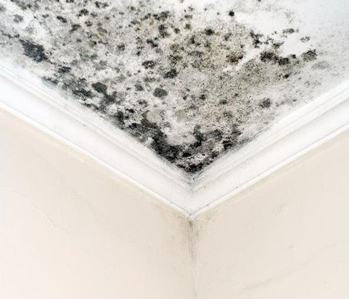 mold growing on ceiling after a leak